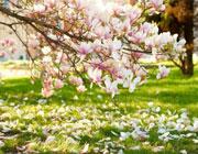 Жизнь как цветущий сад