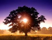 Два райских дерева: что это было?