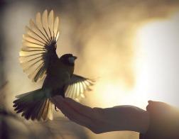 Что такое любовь<br/>Часть 2. Любовь – это преодоление себя