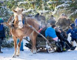 В Витебской епархии проходит фотоконкурс «Рождественская сказка»