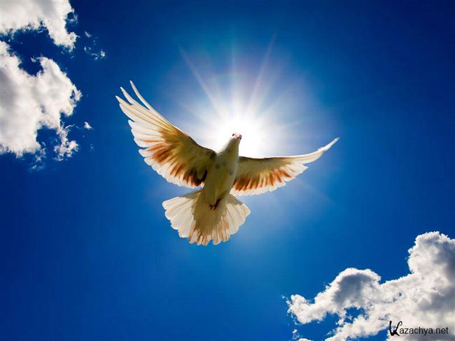 картинки символ мира голубь